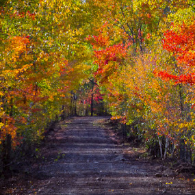 by Michael Haagen - Transportation Roads ( fall colors )