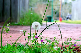 Photo: Weeds are springing up all over.