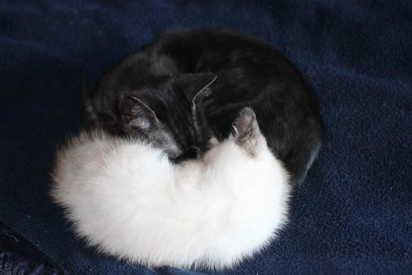 Yin e Yang di paschetto_elena