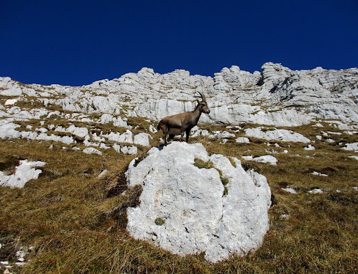 Erba di montagna di LunaStorta
