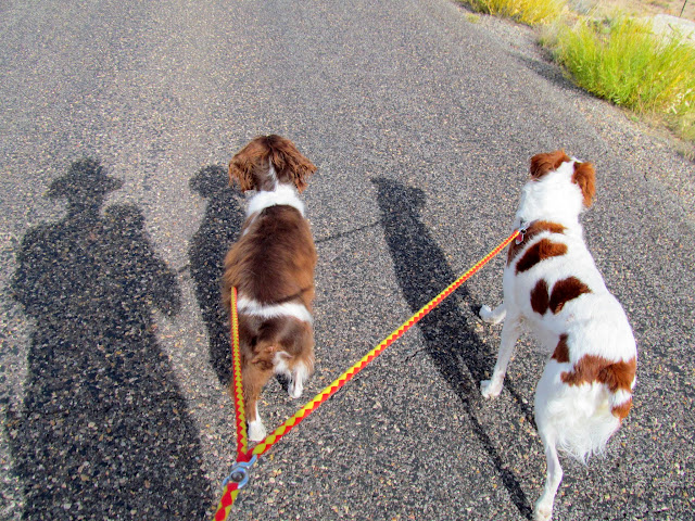 Taking the dogs for a walk to look for arrowheads