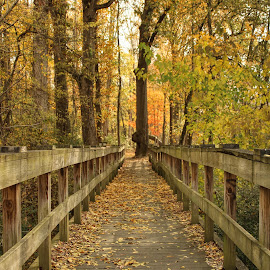 Walking Bridge by Karen Carter Goforth - Uncategorized All Uncategorized ( leaves, nature, woods, wood, bridge, trees,  )
