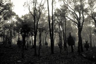 Photo: Mist in the wildwood