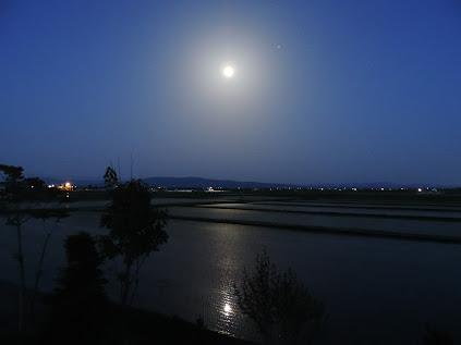 満月の夜の水田