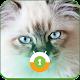 Blue Cat Eyes Wall & Lock