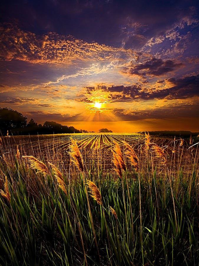 Into Light by Phil Koch - Landscapes Prairies, Meadows & Fields (  )
