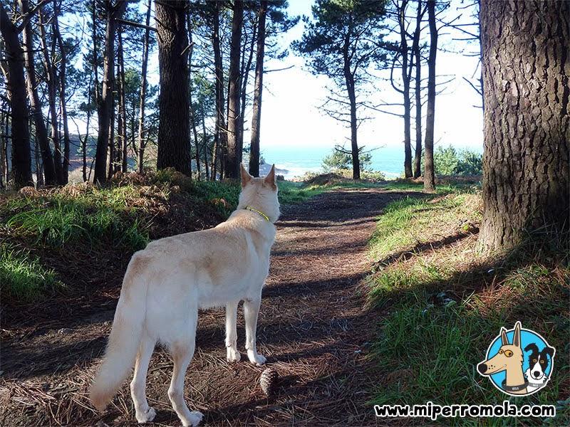 Senderismo con Perro Costa de Dexo - Serantes Ruta 3, Can de Palleiro, Border Collie