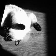 Photo: A cat life.