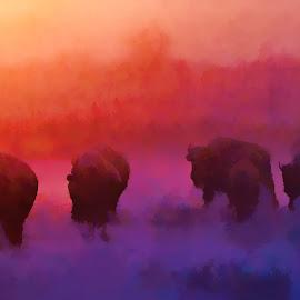 Bison at sunrise by Gaylord Mink - Digital Art Animals ( sunrise, snow, animals, bison, digital art )