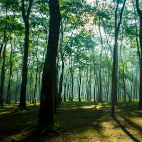 Trees by Topu Saha - Nature Up Close Trees & Bushes ( landscapes, mymensingh, sunrise, green, blue, nature, tree, topu saha, ray, rays, trees )