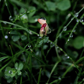 After the rain by Michelle Ng - Flowers Flower Gardens ( raindrops, garden, weed, beauty in nature, flowering, small flower, flower,  )