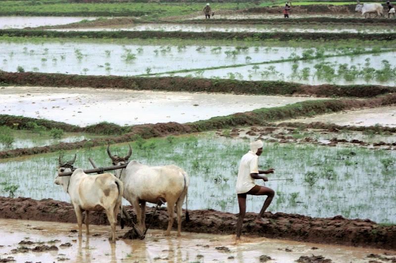Agricoltura primordiale di paolo-spagg