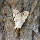NightFly Moth