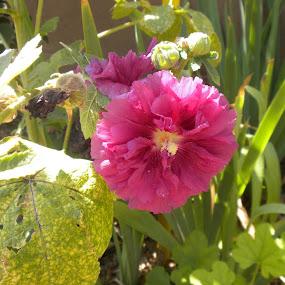 Beauty in the desert by Leah Bittner - Flowers Flower Gardens