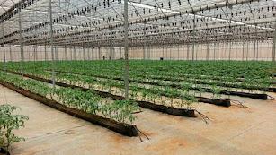 Marruecos quiere reforzar su apuesta por el invernadero