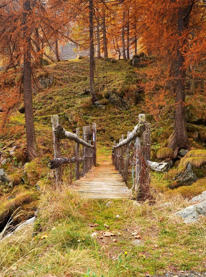 Il ponte nel bosco di Aldo1973