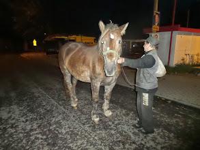 Photo: Białogórski koń powitalny...