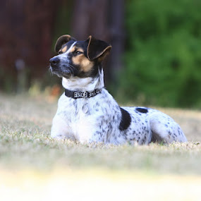 Thinking dog by Nick Soefje - Animals - Dogs Portraits ( hi-tech-photography.com )