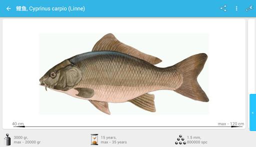 玩書籍App|鱼星球免費|APP試玩