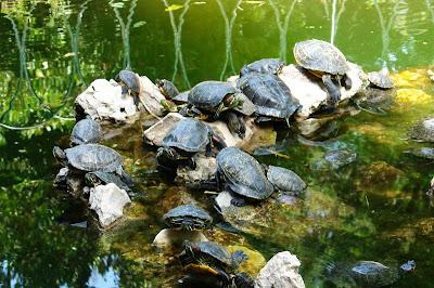 Черепахи в национальном парке