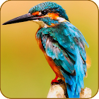 Bird Kingdom - Hidden Object icon