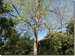 Botanic Gardens Walk 049