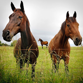 Local View from the three. by Jim Moran - Animals Horses ( field, green sky, pose., horse )