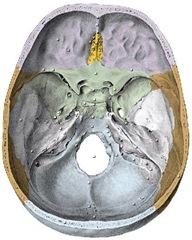 cranio base