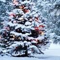 live christmas tree wallpaper icon