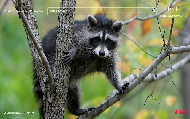 Raccoon Wallpaper for New Tab