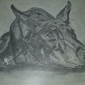 sketch of doberman by Ana Djordjevic - Drawing All Drawing (  )