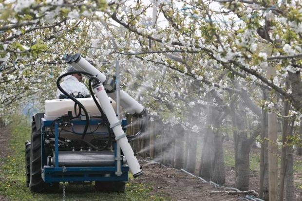 Juan Farias drives a spray rig outfitted with test equipment for the application of pollination in a cherry block in the Prosser, Washington on March 3, 2015. <b>(TJ Mullinax/Good Fruit Grower)</b>