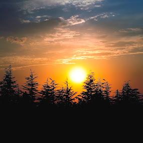 sunset by Yılmz Doğn - Landscapes Sunsets & Sunrises ( sky, view, nature, tree, silhouette, clouds, trees, landscape )