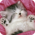 Sleeping Cats Live Wallpaper icon