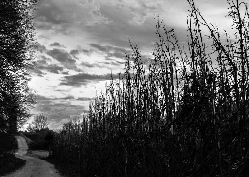 Tra terra e vento di Barbara Surimi