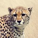 Cheetah Sounds