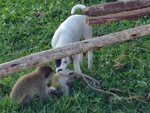Photo: Puppy + baby monkey