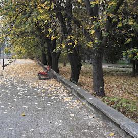Есен by Georgi Kolev - City,  Street & Park  City Parks ( ден., парк., есенен., време., дървета. )