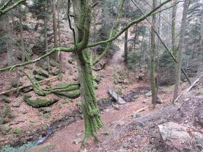 Photo: ruisseau de Tiefenthal