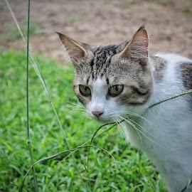 Kiko the cats by Alif  Art - Animals - Cats Portraits ( #cat #animal #cute )