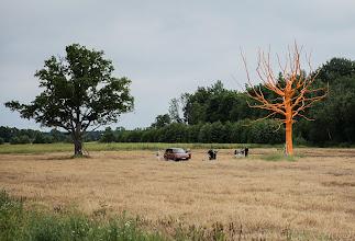 Photo: Vasen puu on ujompi