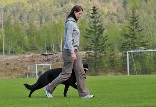 Photo: Line og Joy trener fri ved fot