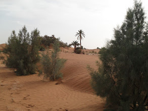 "Photo: The ""Green wall"" of the ""Essence Bosje"" is starting to do it's work in keeping the sand a way from the village."