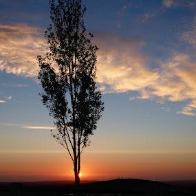 Peek-a-boo by Brendan Mcmenamy - Novices Only Landscapes ( san diego, tree, sunset, peek, sun )