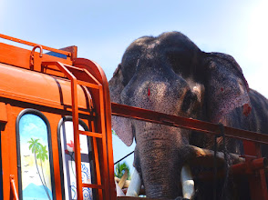 Photo: The elephant is on his way to a festival.