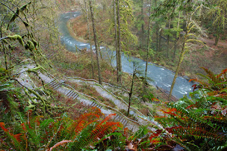 Photo: Silver Falls State Park - stairs down to Lower North Falls