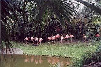 Photo: #017-Jardin botanique de Deshaies