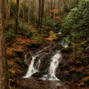 Babbling Brook by Kara Brothers - Landscapes Mountains & Hills ( water, mountains, great smoky mountains, trees smoky mountains, mountain, nature, brook, waterfall, woods )