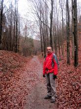 Photo: Schöner Weg durch den Buchenwald.