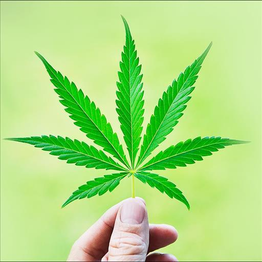 3d marijuana wallpaper - photo #35